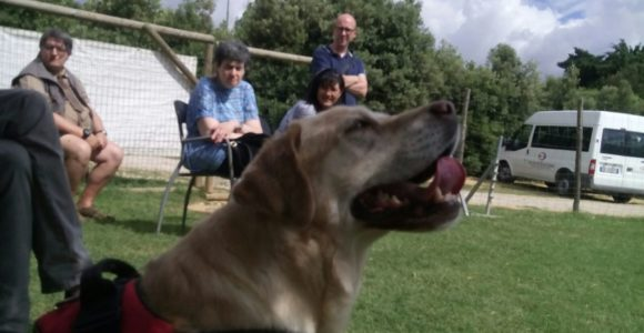 PetTherapy2018 (3)